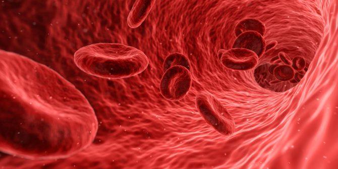 Bild på röda blodkroppar, erytrocyter.