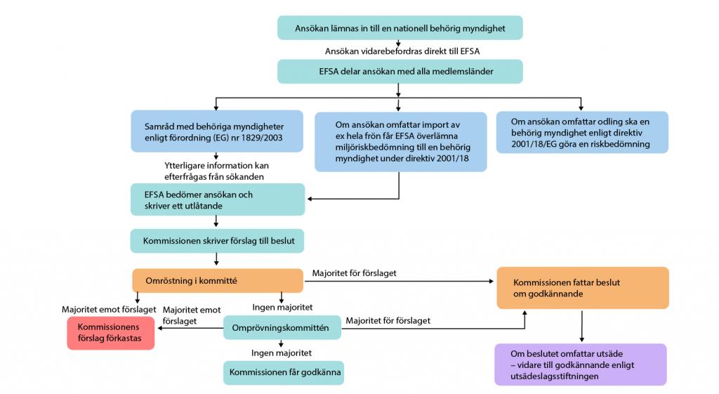 Illustration över beslutsprocessen för ansökningar under förordning 1829/2003. Illustration och copyright: Gunilla Elam.