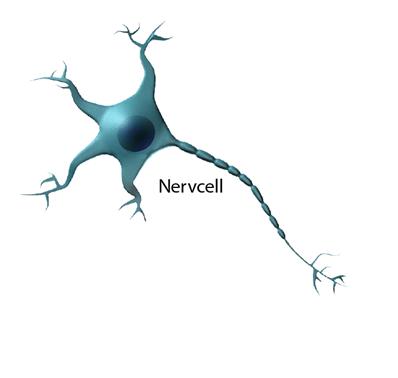 Illustration av en nervcell